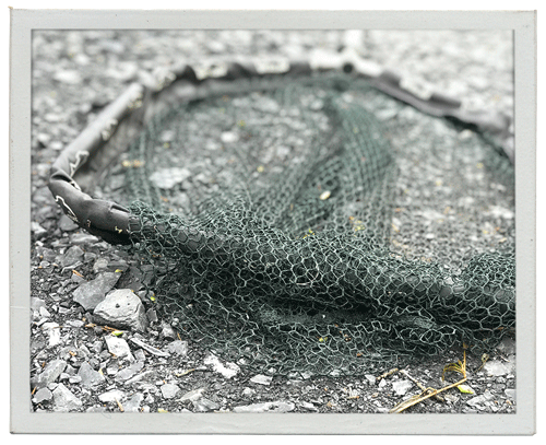 Angeln in naturbelassenen Teichen – Ein Kescher am kleinen Forellenteich